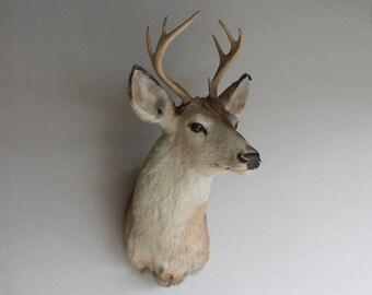 Vintage Adult Taxidermy Deer Head Mount with Antler Rack Rustic Woodland Home Decor