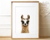 Llama print, Baby animals, PRINTABLE instant download, Farm animals, Nursery wall decor, Nursery art, Kids room decor, Kids wall art, Cute
