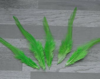Set of 20 lime green rooster feathers