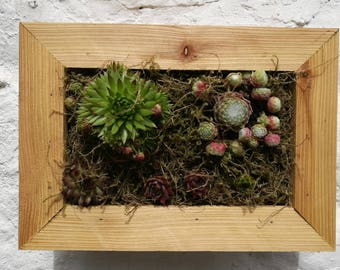 succulent vertical planter, living art, Living Frame, Gift box, by Elf Kendal