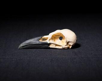 crow skull replica