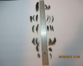 23 Small Green Parrot Feathers