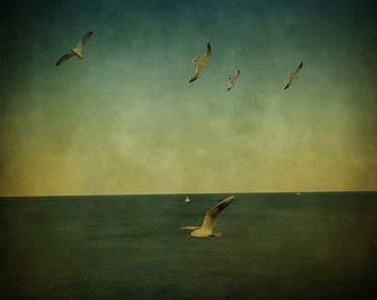 Seascape Gulls Photography,Ocean Fine Art Photography, Bird Sea Wall art, Room Decor, Green blue Square Print