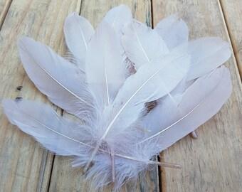 10pc Blush Goose Feathers