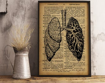 Human Lungs Vintage Style illustration Organs of the Respiratory System in Humans Anatomy Art Print Cabinet Rustic Decor Ideas (HA20)