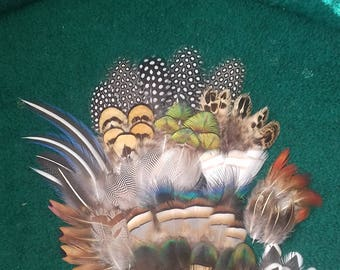 Set of 80+ feathers, naturaly molted, cruelty free