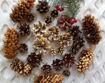 Set of 30 Mixed Pine Cones and Blue Spruce Cones Large Medium Small Cones Natural Decor Organic Cones Rustic Ornaments Rustic Decor