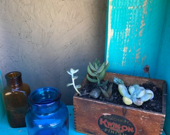 Succulent combo in vintage wood box
