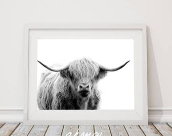 Highland Cow Photo, Farm Animal Art, Cow Poster, Cattle Photography, Portrait, Printable Art, Instant Download Black White Large Art Prints