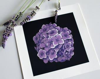 "Fine Art Print 20X20cm ""Purple Hydrangea"""