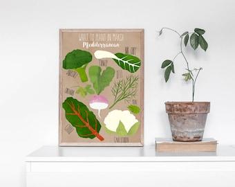 Growing Guide March: Mediterranean - Southern Hemisphere, Australia, Vegie, Plant, Gardening