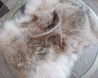 Coyote fur, rustic table accent, fur piece, fur table accent, cabin decor, lodge decor, rustic decor
