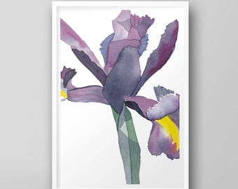 Close Up of an Iris, No.2 — floral, purple, yellow, simple, beautiful, white, flowers, botanical, gift, bedroom, birthday