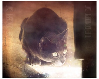 Cat art photography, cat lover gift, fantasy, photo print, animal photography, kitty, kitten, mystery, cat picture