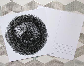 "postcard ""Sleepy pangolin"""