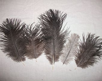 Ostrich 10 to 20 cm 4 Pack set 10 feathers