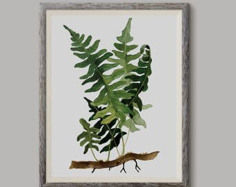 Paproć 2, Fern 2,(Polypodium vulgare) - illustration - print