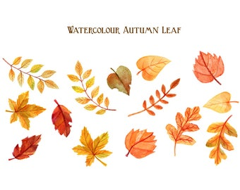 Watercolour Autumn Leaves 14 Clip Art Graphic Design PNG High Resolution N01