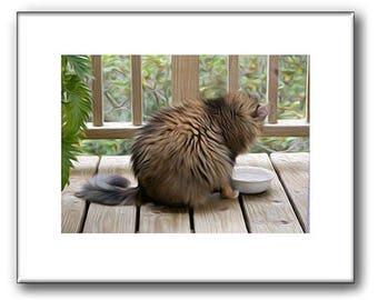 Maine Coon Cat - Cat Prints - Pet Portraits - 8 x 10