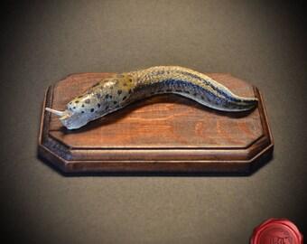 Limax maximus, Leopard slug