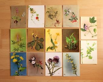 14 postcards Prof. Kriegel collection of Madaus