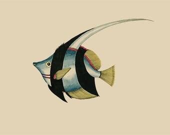 Angelfish print, fish print, giclee print,  bezaan print, fish art, fish art print, vintage fish print, vintage ocean art, nautical art