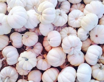 Currently unavailable - Pumpkin Baby Boo White Jack Be Little 10 Seeds NonGMO Organic Vegetable