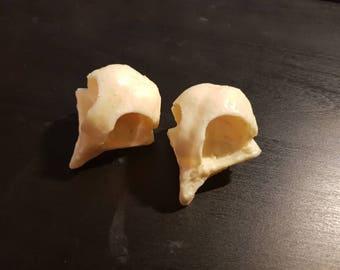 Resin Owl Skull
