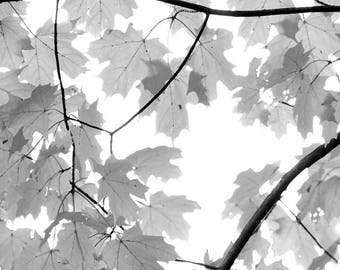 Maple Leaves. Black and White Nature Photography Fine Art Print. Rendered Watercolor Texture, Wall Decor.