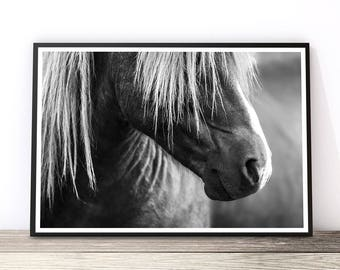 Horse Lover Gift, Horse Print, Horse Photo, Affiche Scandinave, Black and White, Horse Art, Wild Horse, Icelandic Horse, Equine Art