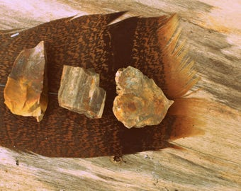Petrified Wood for Emotional Healing