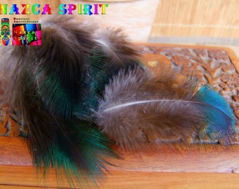 6 large feathers back Peacock color teal Iridescente 5 cm to 10 cm