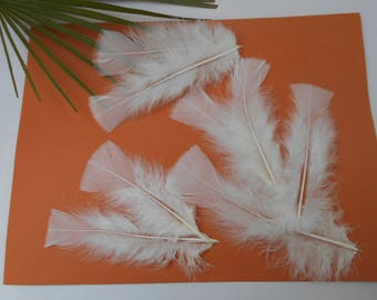 20 ivory feathers about 12 cm