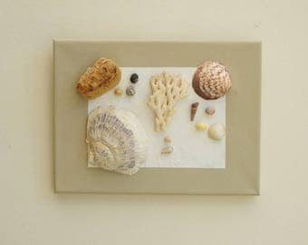 3D canvas: water * shells, driftwood
