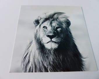 lion black and white square card