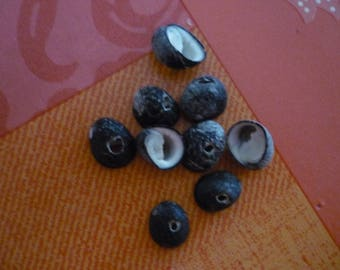 16 black 15 mm x 12 mm drilled snail shells