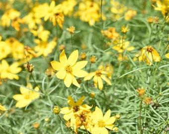 Yellow Flowers 8x10