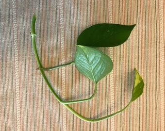 House plant propogation