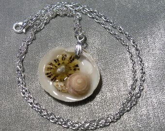 Scottish seashell resin pendant on a silver plated bail and chain