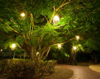 Tree Photography, Magical tree photo, Landscape photo, Enchanted tree, Nature art, Wall art, Printable download, Tree decor, green, Print