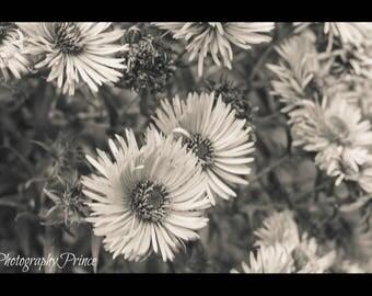 black&white flower print