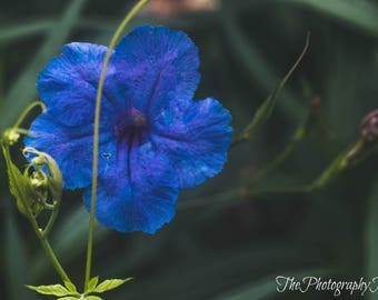 Flower Photography Print