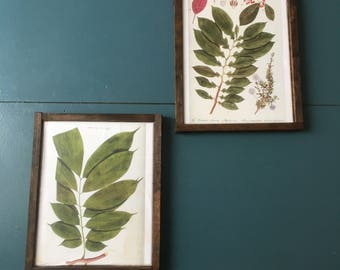 Farmhouse Botanical Prints , barn wood like frame , set of 2 fern prints