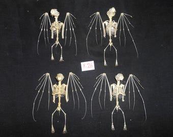 Taxidermy Lesser Short Nosed Fruit Bat Cynopterus Brachyotis Skeleton 4 Pcs
