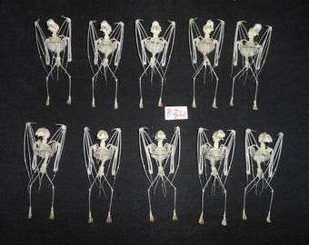 Taxidermy Real Fruit Bat Rhinopholus Lepidus Skeleton 10 Pcs