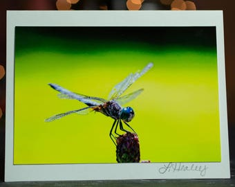 Dragonfly Photo Greeting Card