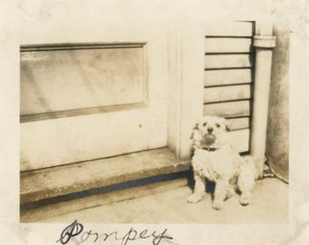 vintage snapshot photo 1914 Pompey The Scruffy Dog Stands by Back Door