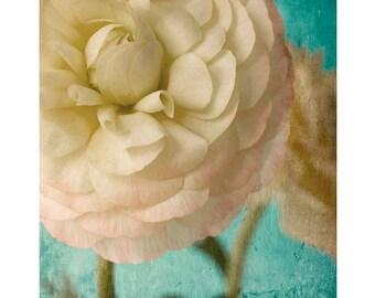 Flower Art, Pink Ranunculus Photograph, Teal Floral Decor,  Fine Art Print, Bedroom Decor, Cottage Chic
