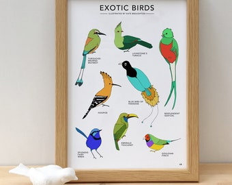 Exotic Birds print - illustrated wildlife poster - tropical bird wall art - birds of paradise - colourful bird art - new home gift - parrots