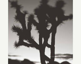 SALE black and white Joshua Tree photograph, desert art print, minimalist decor, yucca tree photo, loft decor, Palm Springs art, surreal